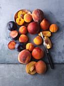 An arrangement of various stone fruits
