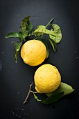Two Zedra lemons with leaves on a black background