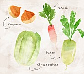 an arrangement of edible chestnuts, radish, daikon radish and Chinese cabbage (illustration)
