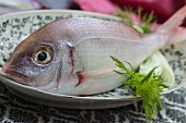 Gilthead seabream on a black-and-white patterned plate