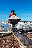 Sea salt being harvested in Samut Sakhon, Thailand