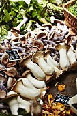 Fresh organic mushrooms on a market stand