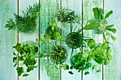 Various herbs in glasses of water (parsley, dill, oregano, thyme, sage, rosemary, coriander, basil) on a wooden surface