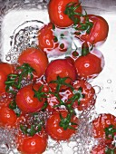 Tomatoes in a sink