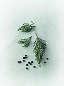 Juniper berries and juniper sprigs