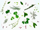 Various fresh herbs on a white surface (seen from above)