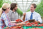 A businessman with agricultural producers checking the quality of tomatoes