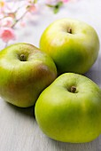 Three Bramley apples