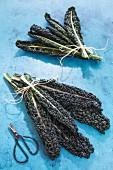 Bundles of black kale leaves