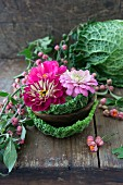 Savoy cabbage leaves and zinnias in wooden bowl next to spindle seed heads on wooden surface