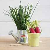 Chives and radishes in small containers