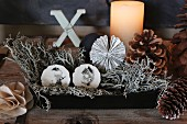 Festive arrangement of lichen and furniture knobs hand-painted with birds in box