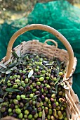 Olives in a woven basket