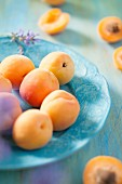 Apricots on a blue plate