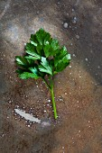 A leaf of parsley