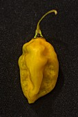 A Bonda Ma Jacques chilli pepper