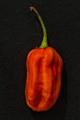 A Carolina Reaper chilli pepper