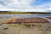 A mussel farm by the sea