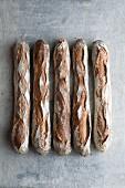 Baguette de Campagne (French baguettes)