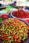 Assorted chilli peppers at a market in Phuket, Thailand, Asia