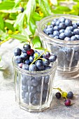Blueberries in glass jars