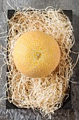 A yellow cantaloupe melon on straw (seen from above)