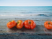 Several tomatoes against an ocean background