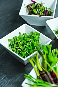 Dishes with micro-herbs and micro-vegetables
