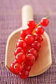Rote Johannisbeeren auf einer Holzschaufel