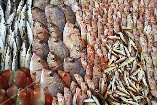 Lots of different Mediterranean fish