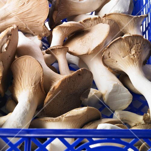 Fresh king trumpet mushrooms in a crate