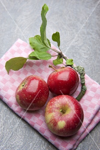 Red apples on a kitchen towel