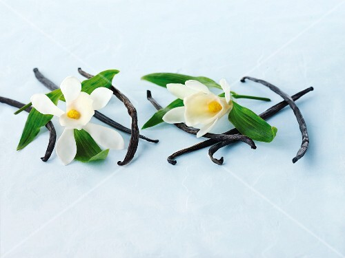 Vanilla pods and vanilla flowers
