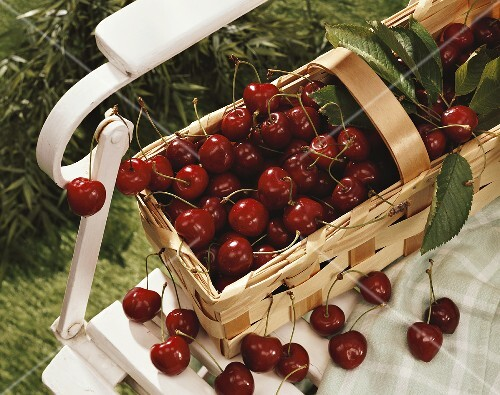 Sweet cherries in basket