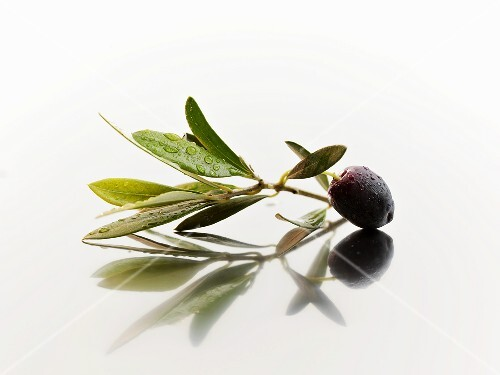 Olive sprig with black olive