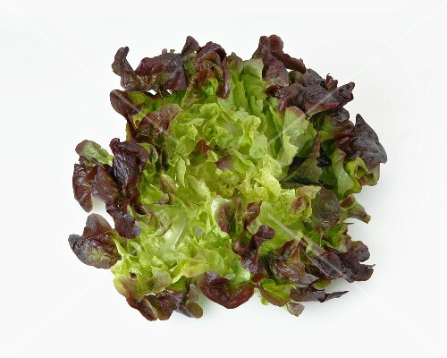 An oak leaf lettuce