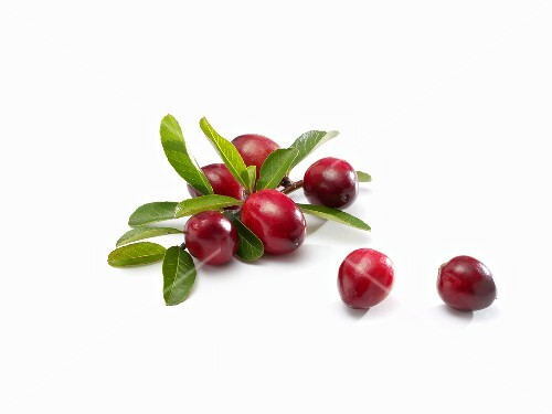 Several cranberries with leaves