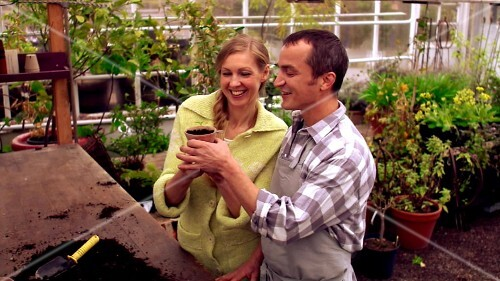 Man and woman planting young plant in a pot