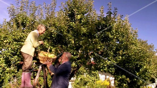 Mature couple picking apples