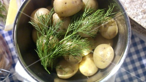 New potatoe with dill (Midsummer Festival, Sweden)