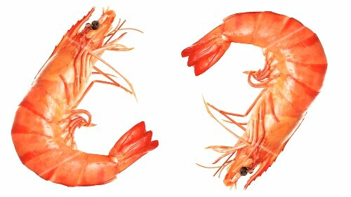 Two king prawns