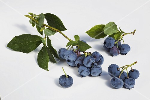 Blueberries with twigs and leaves