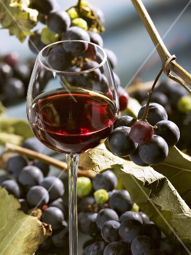 A glass of red wine with grapes in the background