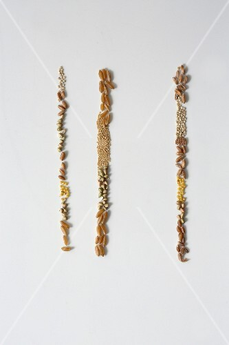 Various seeds next to each other in three rows
