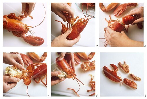 Preparing a lobster