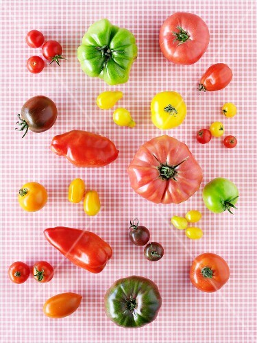Various different types of tomatoes