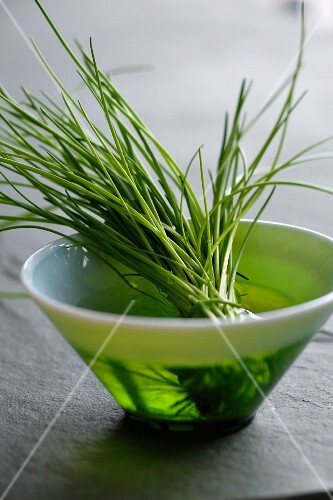 Fresh chives in a bowl of water