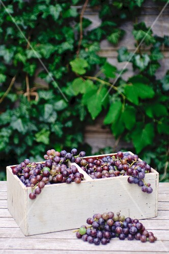 Concord grapes in a wooden basket