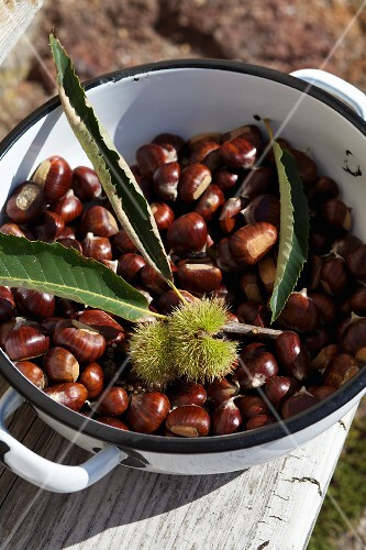 Fresh chestnuts in an enamel pot
