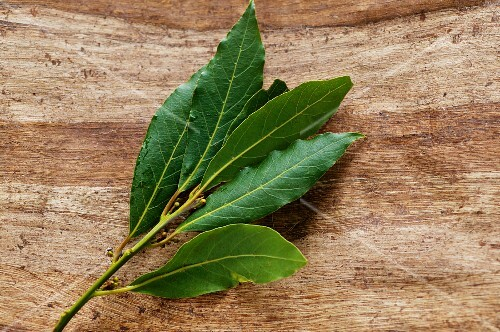 A bay leaf sprig on a wooden surface
